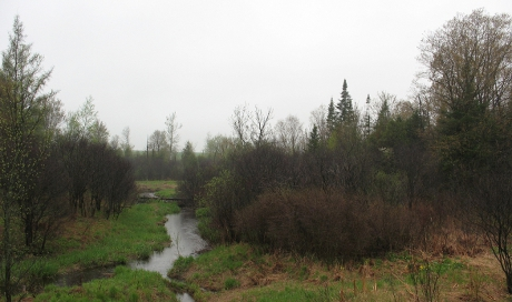 View of creek and marshy scrub on a wet spring day